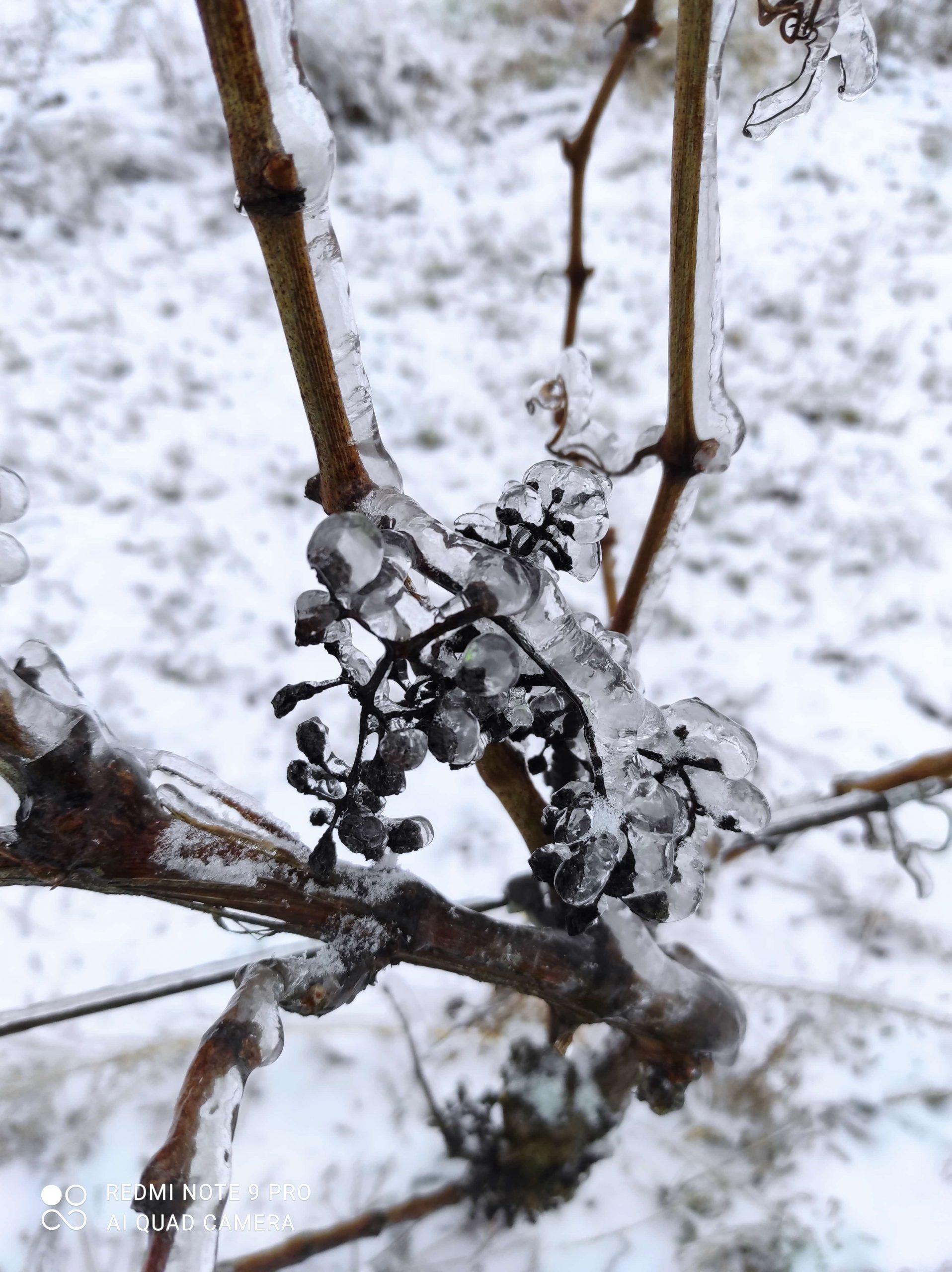 vinohrad10_Vinarstvo Kopecek-min