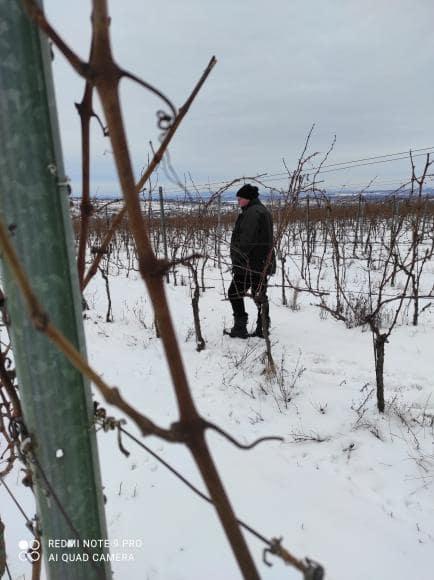 vinohrad1_Vinarstvo Kopecek-min